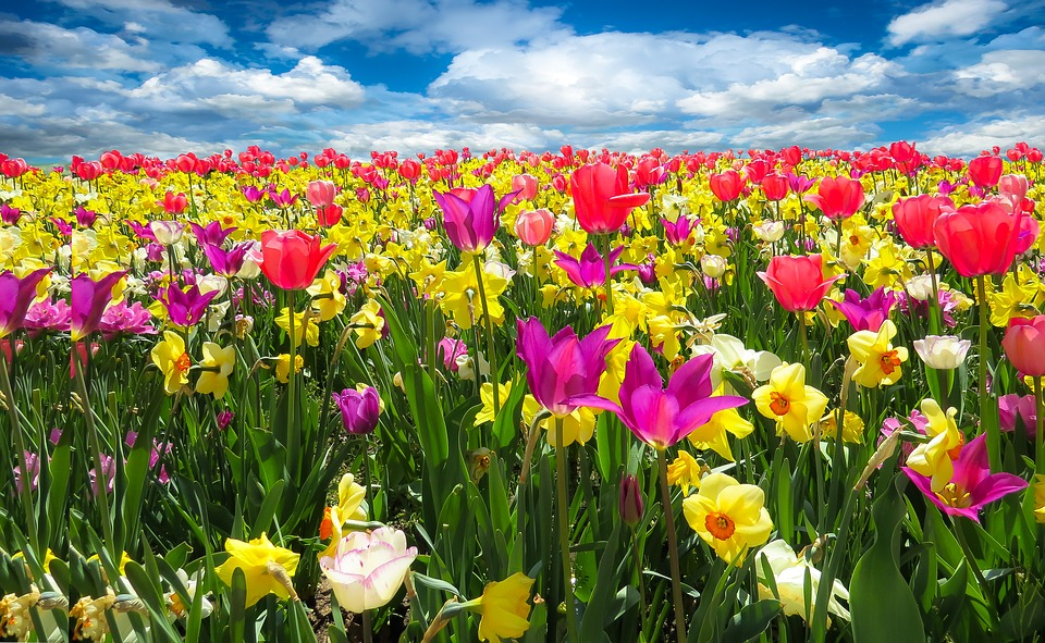 different types of flowers for spring season for your next weekend getaways